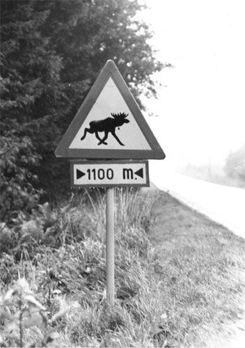 Elch Schild Verkehrszeichen