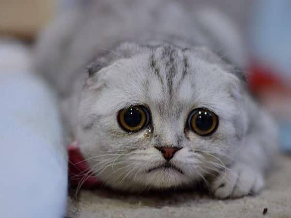 Schmerzmittel für kranke Katzen