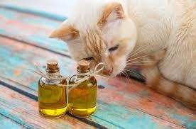 CBD Öl Katze